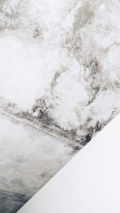 Is a Condo Association Responsible for Mold?